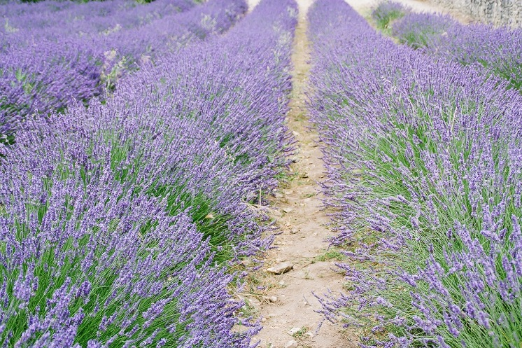 provence+3